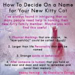 how-to-name-your-new-kitty-cat
