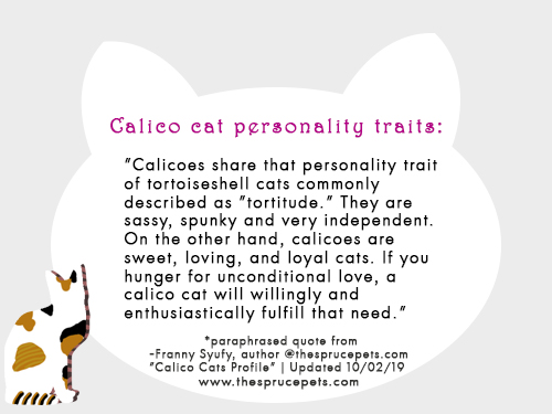 calico-cat-personality