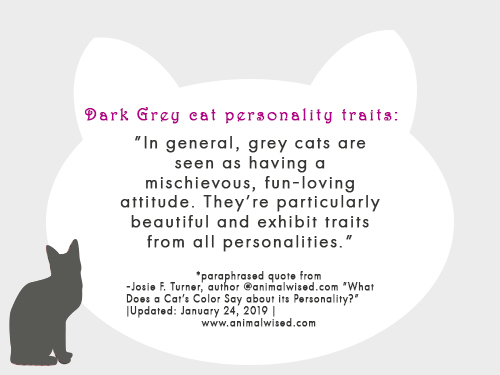 grey-cat-personality