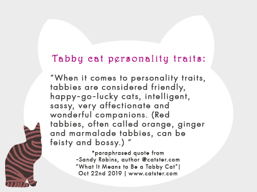 tabby-cat-personality